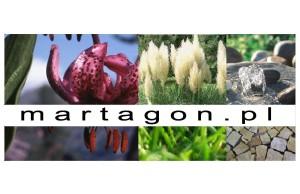 martagon ogrody